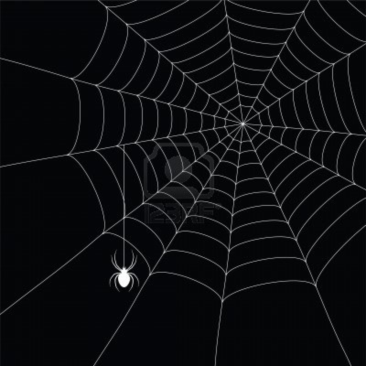 7985938-white-spider-and-spider-web-isolated-on-the-black-background