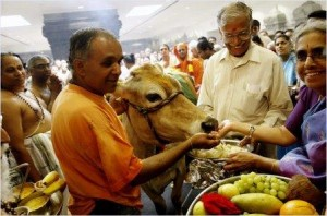 cow-puja